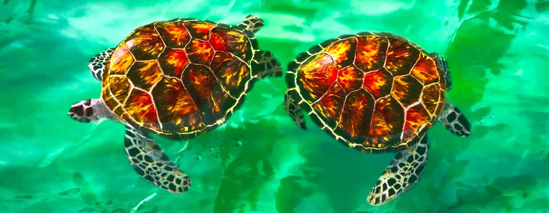 Mooie-kleuren-en-scherp-contrast-met-Maui-Jim-zonnebril-met-gepolariseerde-glazen-kopen-bij-MauiJimzonnebril.nl.